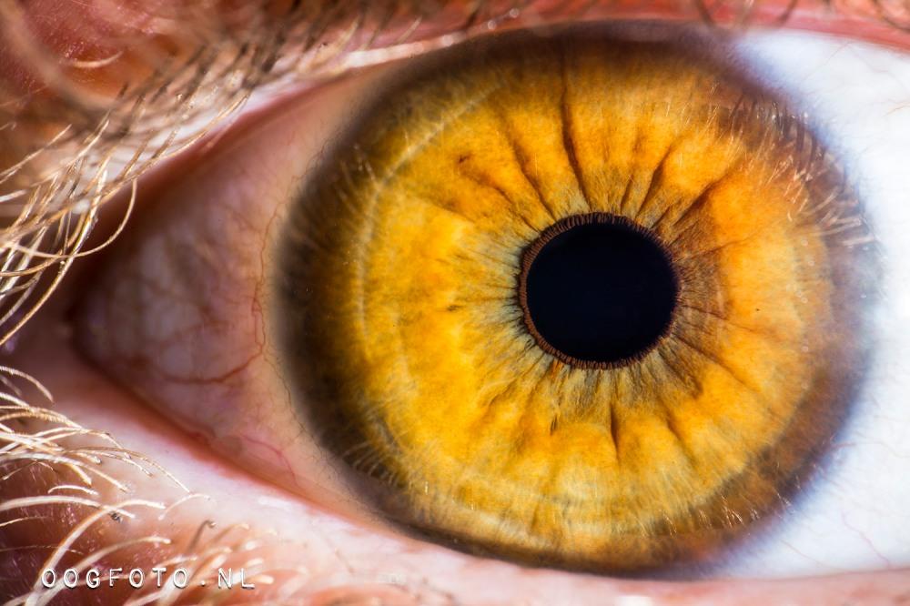 20161218-oogfoto-hr-tiff-4981-website-lr