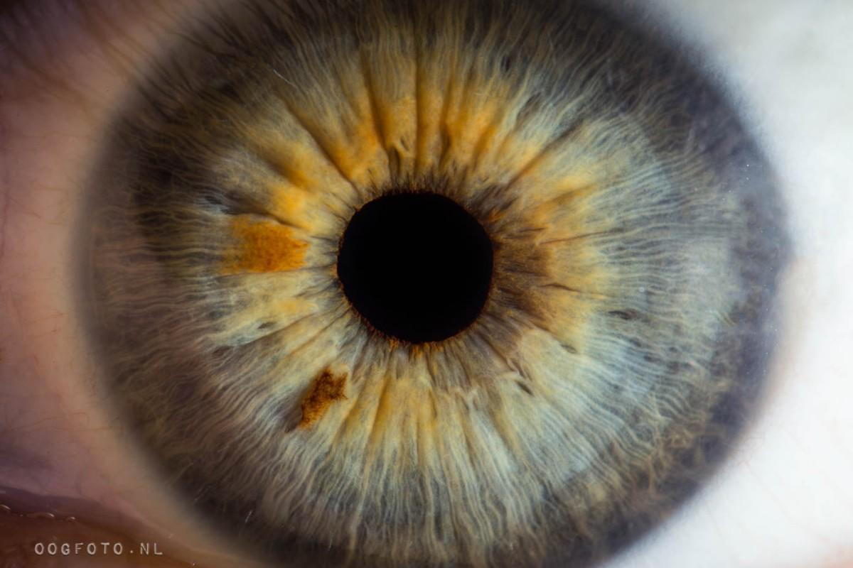 oogfoto amsterdam fotografie groen oog ogen macro iris