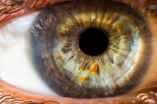 oogfoto amsterdam fotografie groen oog ogen macro iris photography eye
